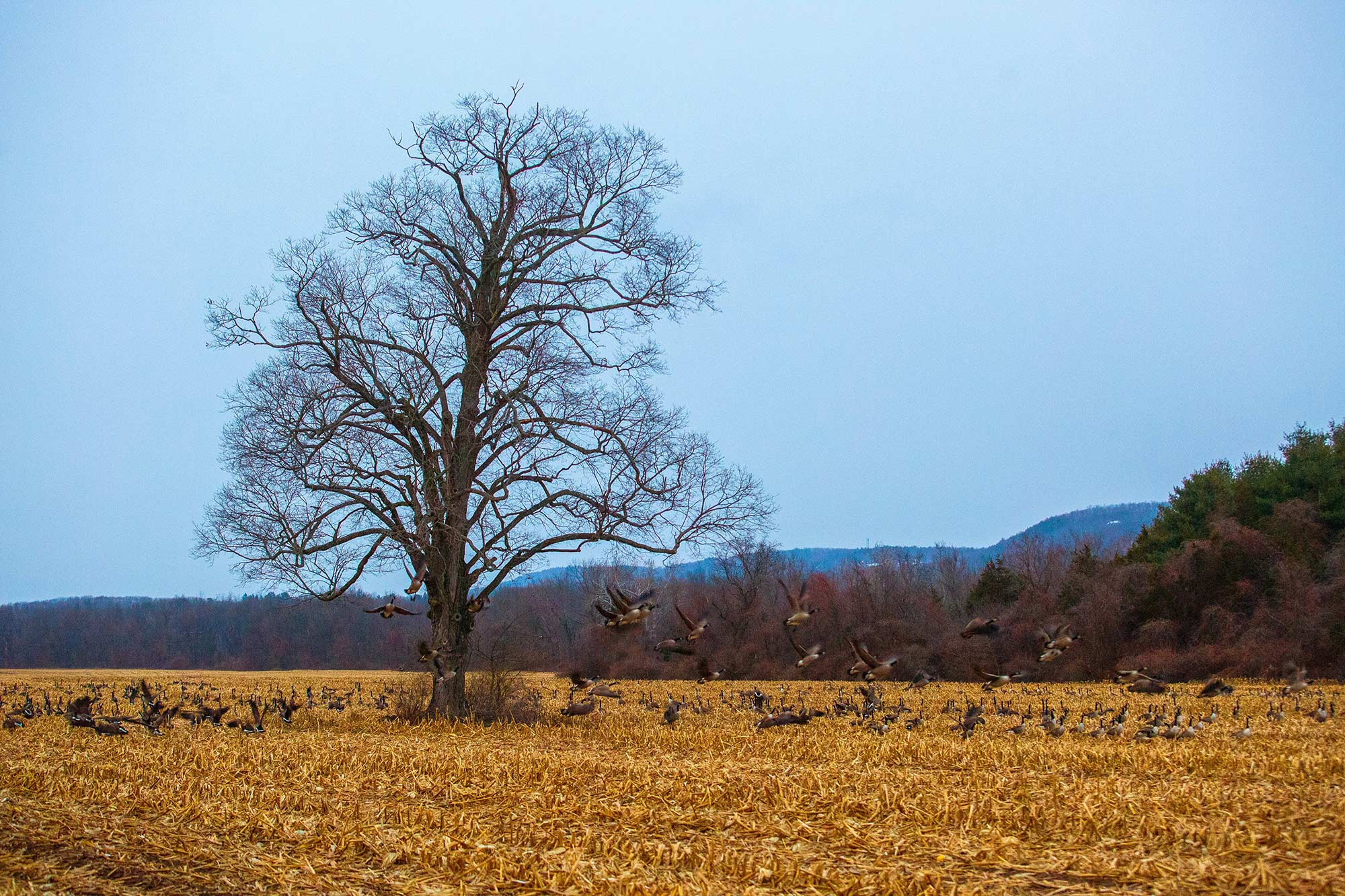 Simmons Farm Field, Avon, CT, 12/11/14