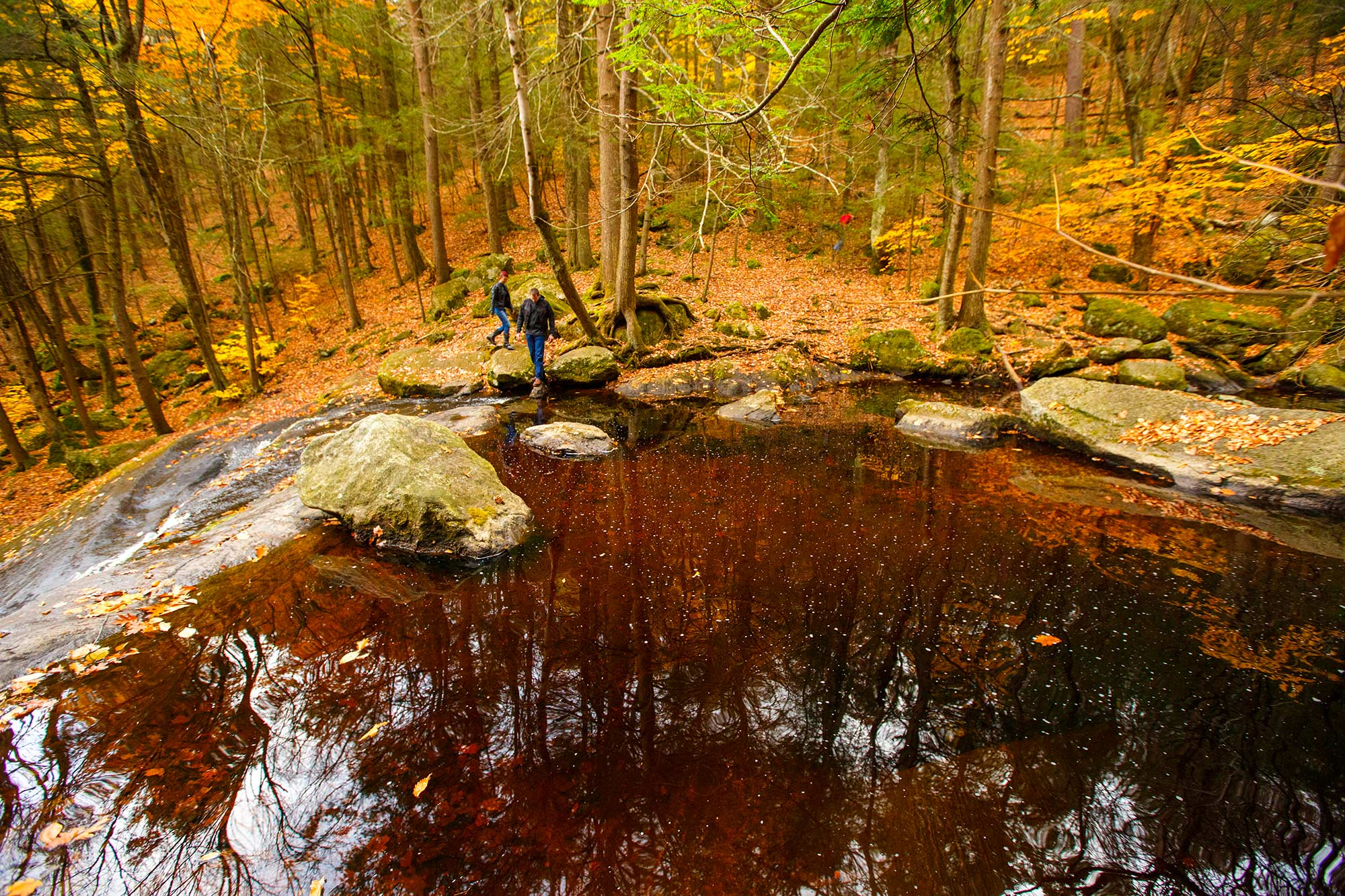 Enders State Forest, Granby, CT - 11/1
