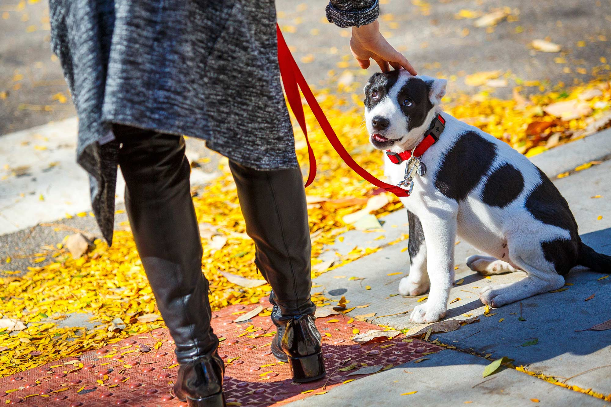 Lincoln Park Puppy, Chicago, IL - 10/19/15