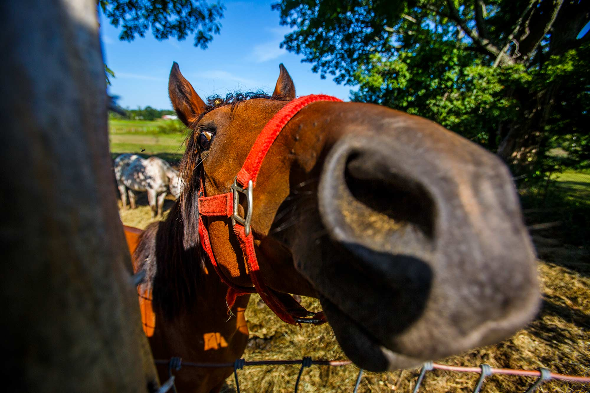 Why the Long Face?, Granby, CT - 9/6/15